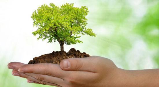 dia del medio ambiente (6)