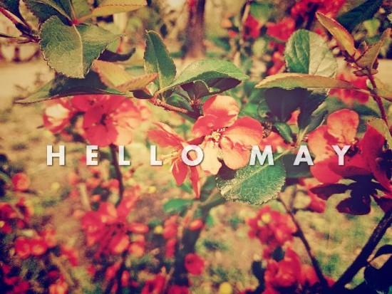 Hello May - Hola Mayo  (7)