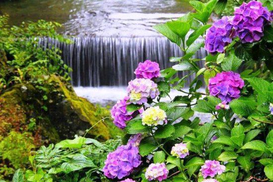 Paisaje con Flores (13)