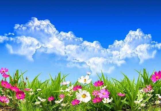 Espectaculares paisajes con flores de colores muy bonitas - Best primer for wallpaper ...