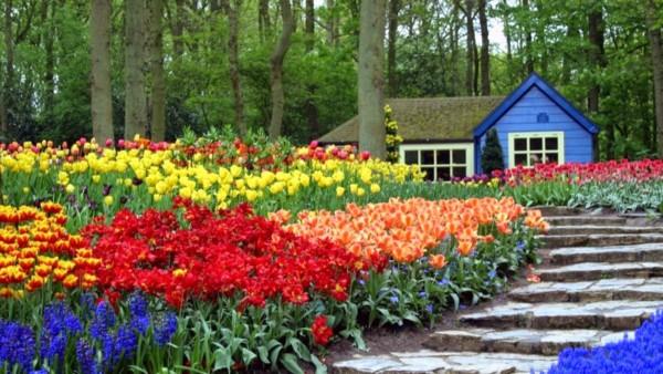 Espectaculares paisajes con flores de colores muy bonitas for Foto contemporanea de jardin