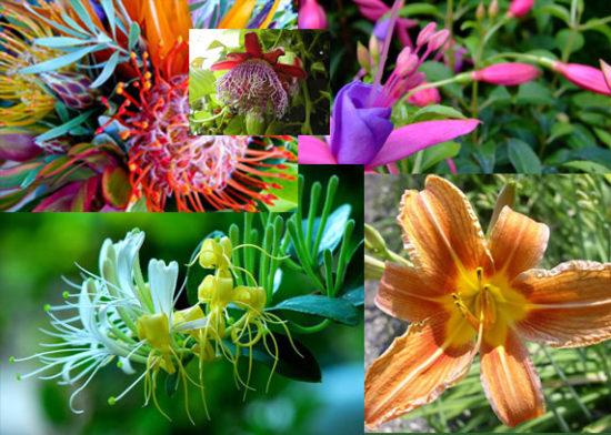 Plantas exoticas y nativas (11)