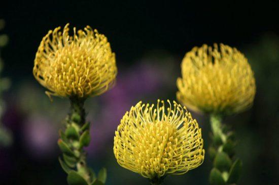 Plantas exoticas y nativas (14)
