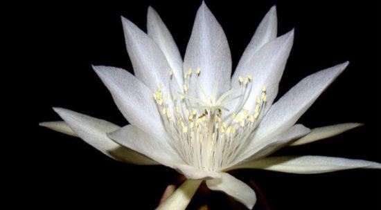 Plantas exoticas y nativas (3)