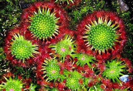 Plantas exoticas y nativas (32)