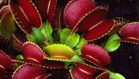 Plantas exoticas y nativas (37)