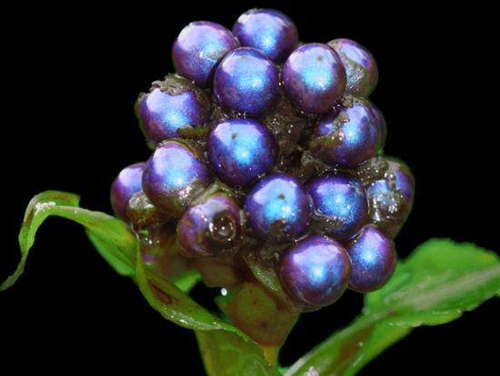 Plantas exoticas y nativas (8)