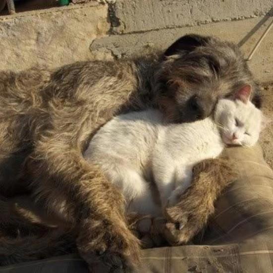 animales tiernos descansando  (14)
