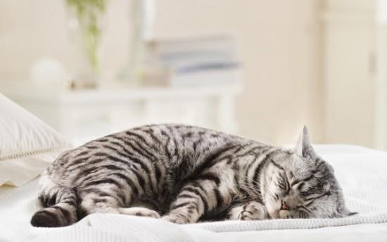 animales tiernos descansando  (15)