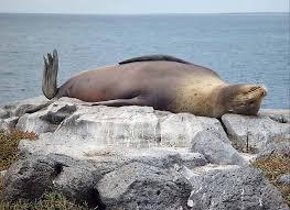 animales tiernos descansando  (16)