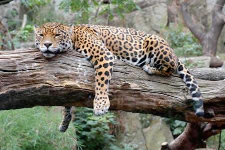 animales tiernos descansando  (17)