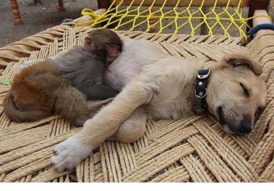 animales tiernos descansando  (24)