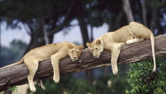 animales tiernos descansando  (4)