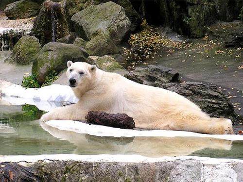 animales tiernos descansando  (6)