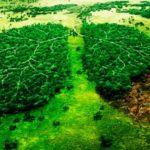 Frases e información para el Día del Medio Ambiente en imágenes
