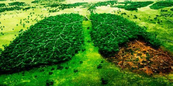 día del Medio ambiente (2)