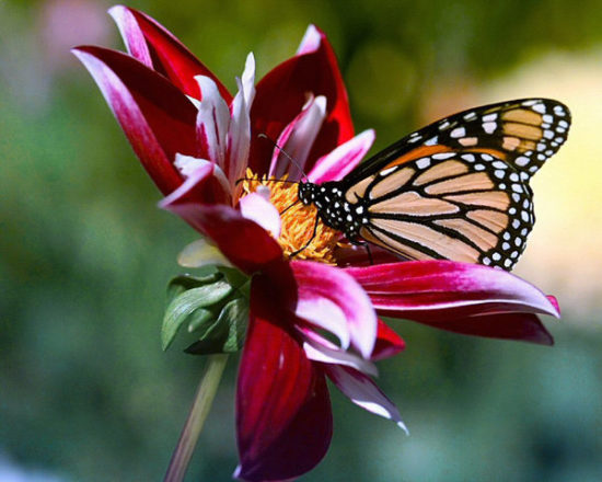 flores exoticas hermosas (12)