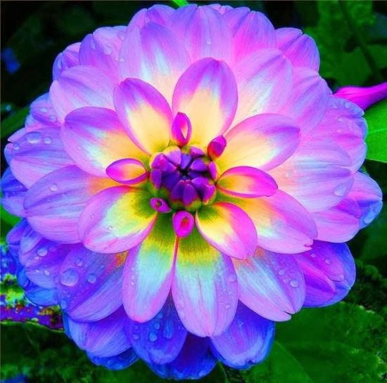 Resultado de imagen para imágenes de hermosas flores
