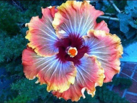 flores exoticas hermosas (16)