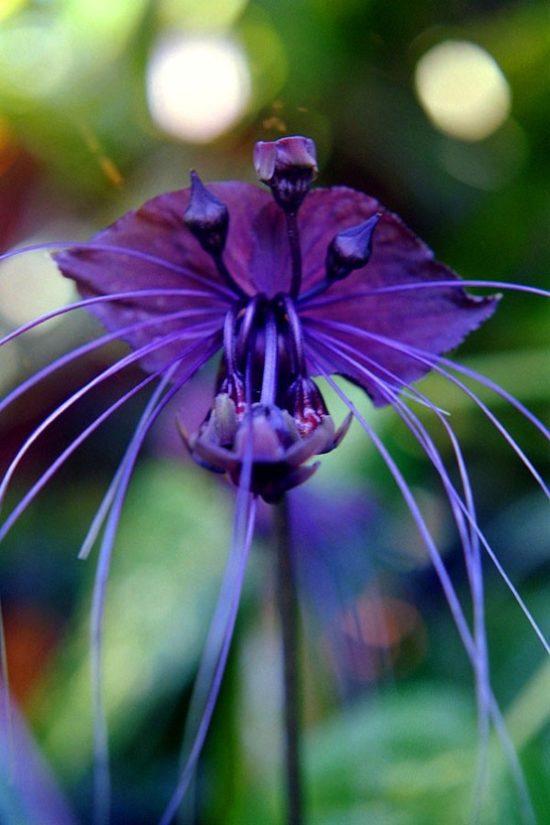 flores exoticas hermosas (17)