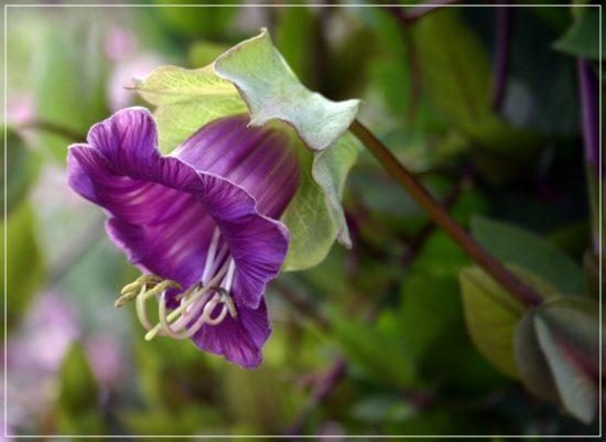 flores exoticas hermosas (18)