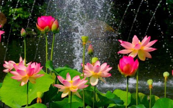 flores exoticas hermosas (2)
