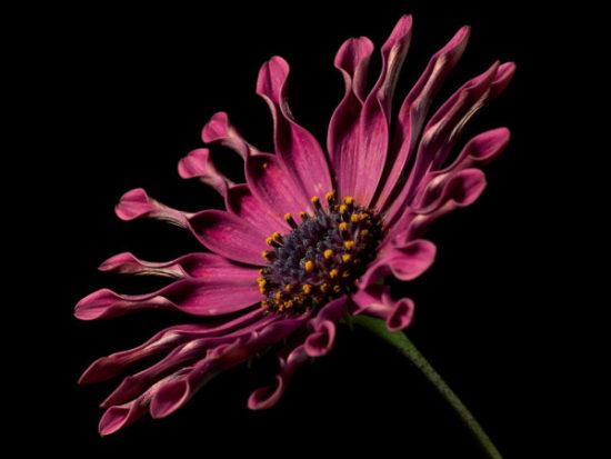 flores exoticas hermosas (5)