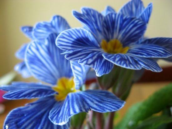 flores exoticas hermosas (7)