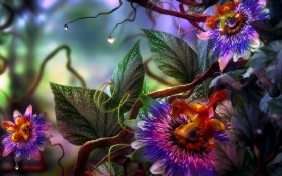 flores exoticas hermosas (9)