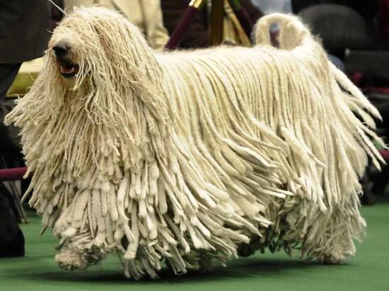 perro guardian (6)
