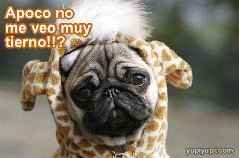 Frases e imágenes graciosas con animales 35