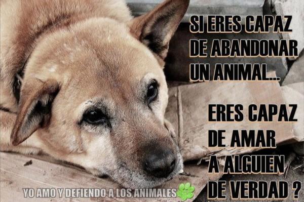Frases e imágenes graciosas con animales para compartir y