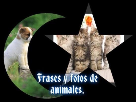Frases e imágenes graciosas con animales 51