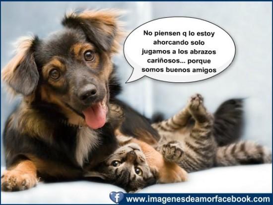 Frases e imágenes graciosas con animales 56