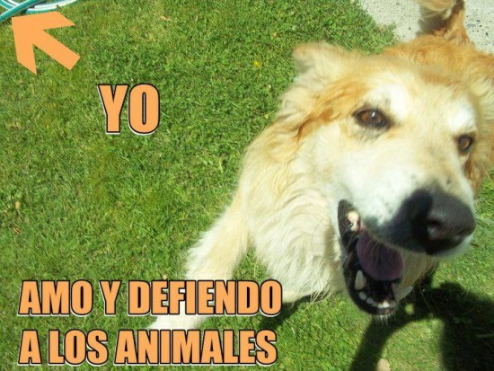 Frases e imágenes graciosas con animales 10