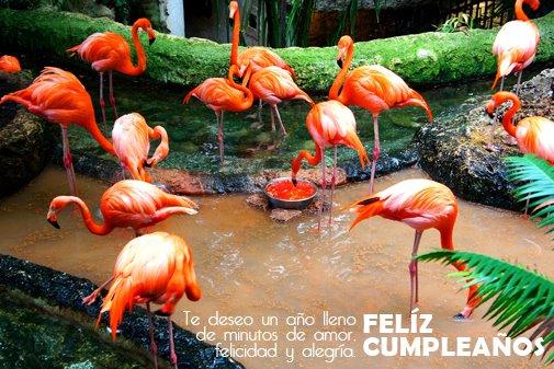 postales Animadas de Cumpleaños Feliz (11)