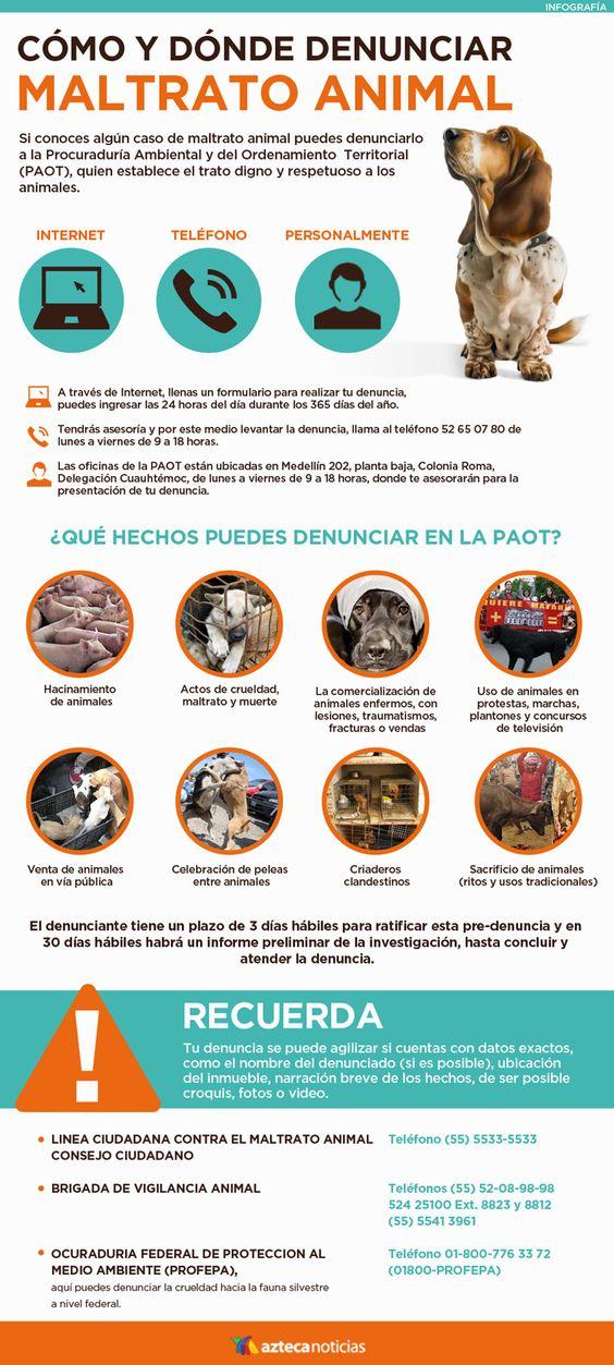 Felíz Día Del Animal Imágenes Frases E Información Para El