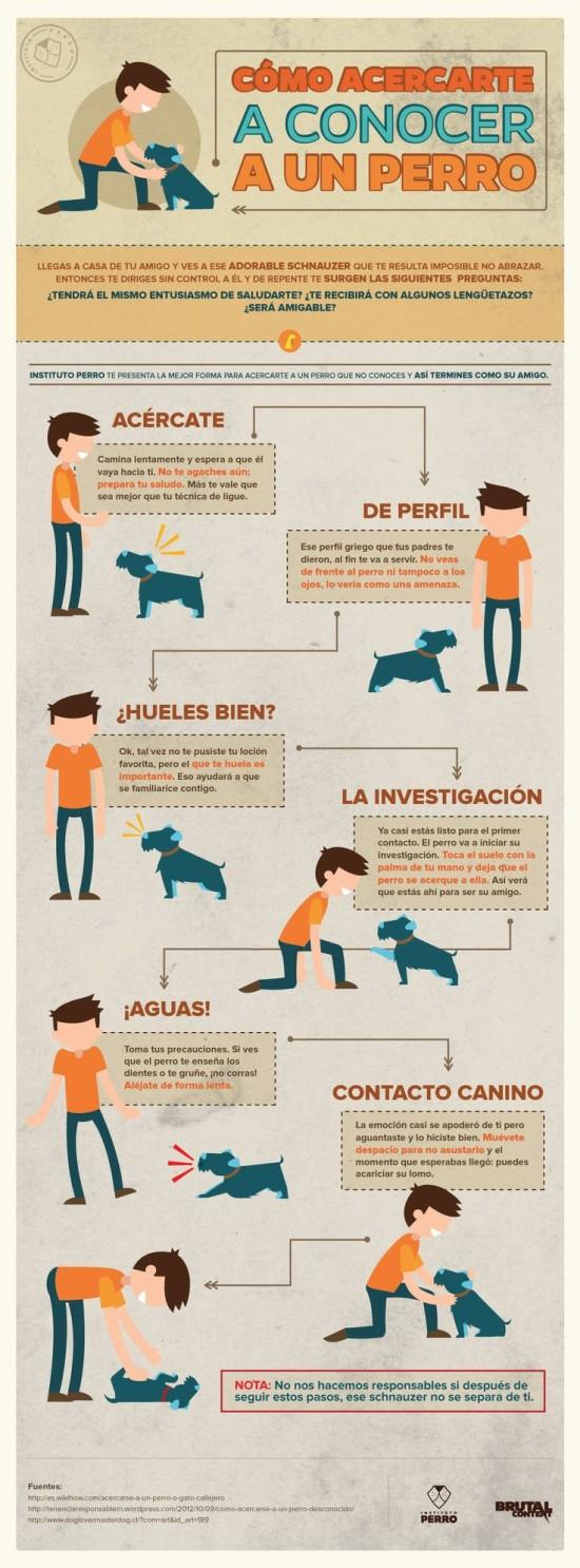 Infografias de Perros  (2)