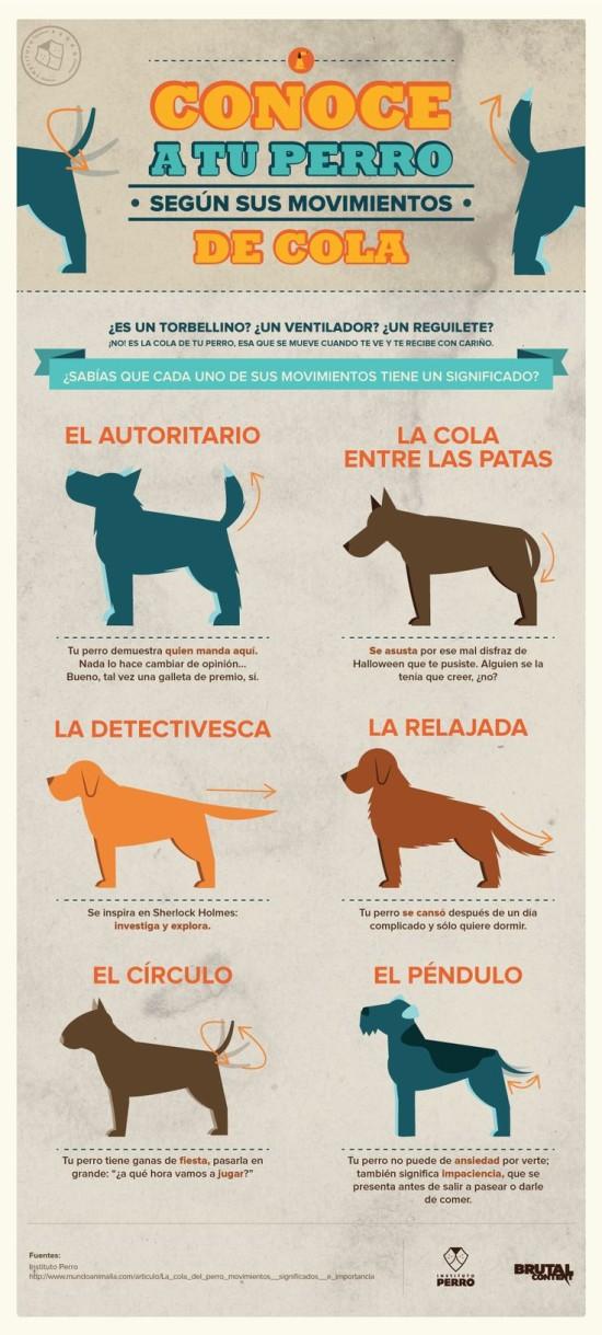 Infografias de Perros  (3)