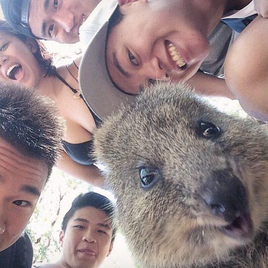 Selfies con amimales (7)