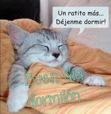 gato-duerme-arropado