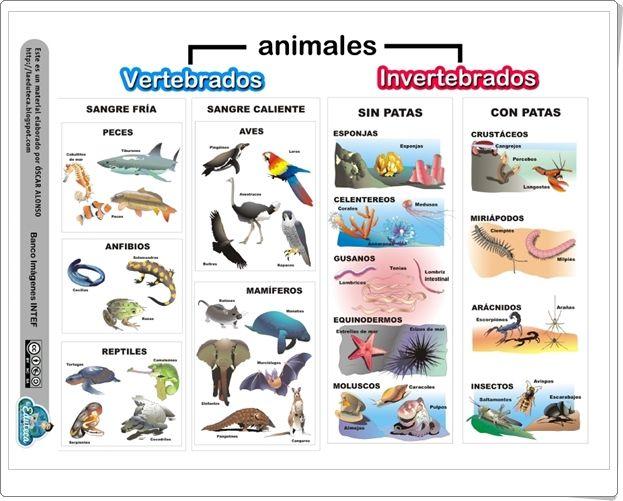 Felíz Día del Animal: Imágenes, frases e información para el 29 de ...