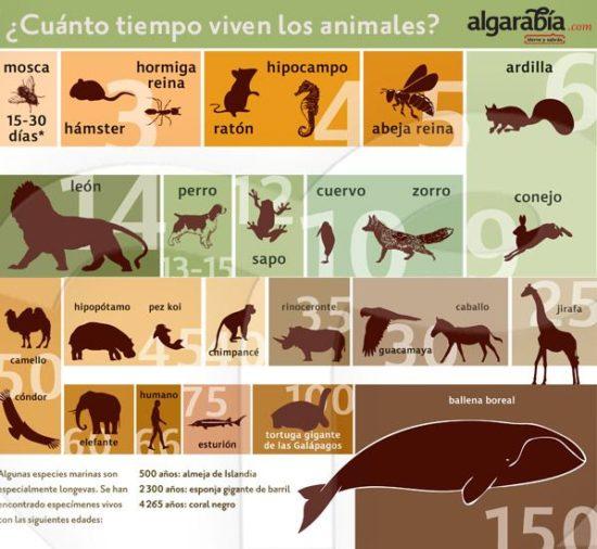 información Día del Animal (4)
