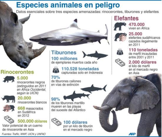 información Día del Animal (8)