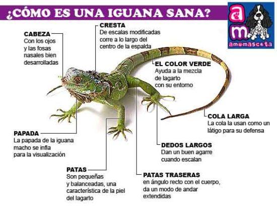 información Día del Animal (9)