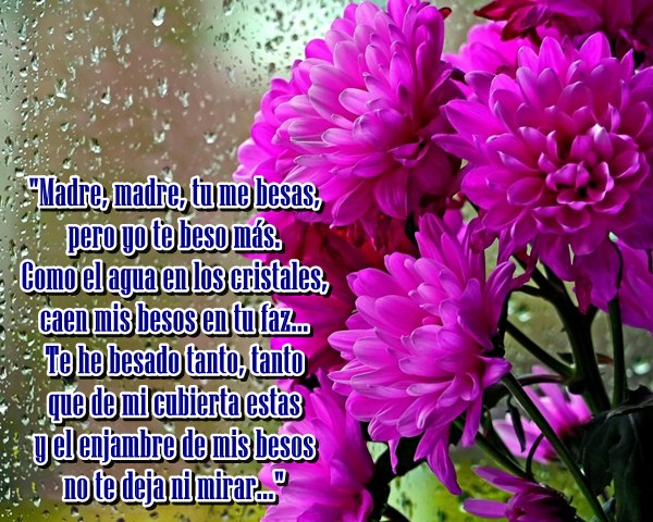 lluvis-flores-lilas