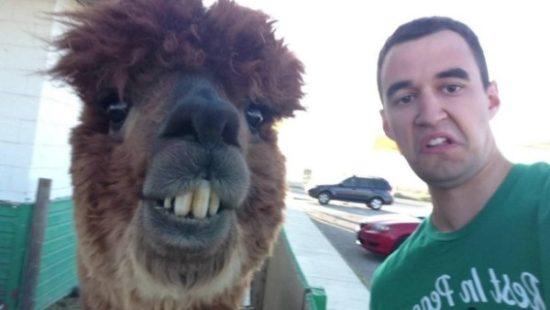 selfies divertidas con Animales (1)
