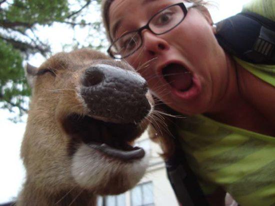 selfies divertidas con Animales (17)
