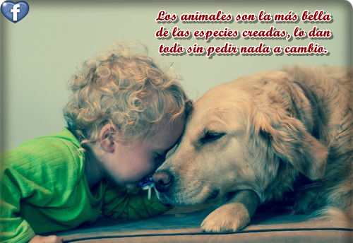 Animales con Frases  (1)