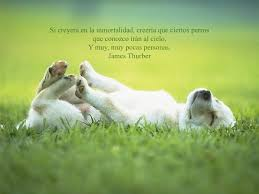 Animales con Frases  (10)